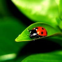 Lawn Insect Pests