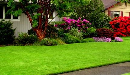 Lawn Grub Control