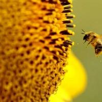 Pesticide Myths